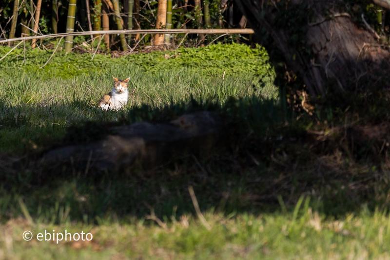 今日の一枚 三毛猫