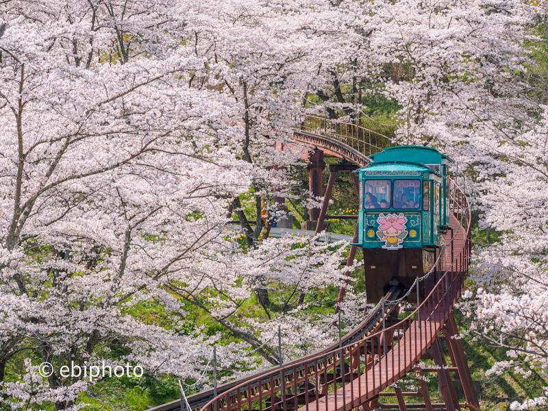 「【ホームメイト・リサーチ】春の桜写真・動画コンテスト」受賞