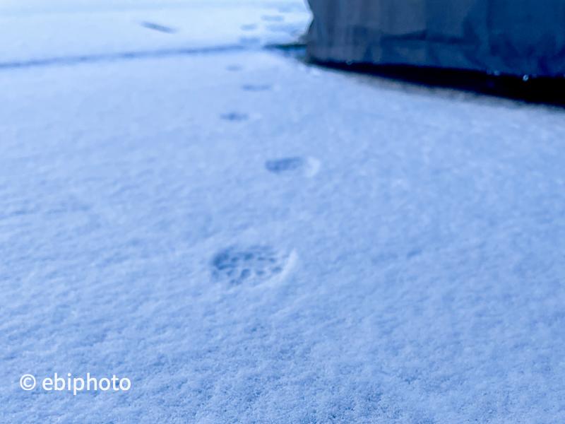 今日の一枚 雪と肉球