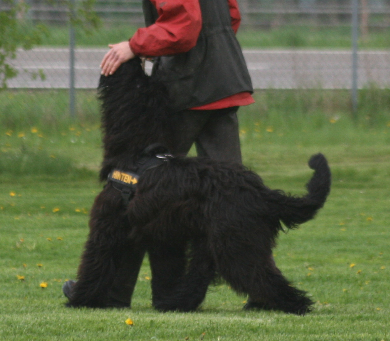 April 2013, Training Obedience