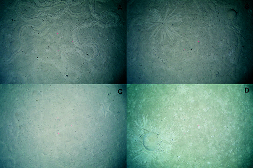 Lebensspuren seen from OFOS: A) Animal track; B) Burrowing single animal; C) Starfish imprint; D) Burrowing animal colony