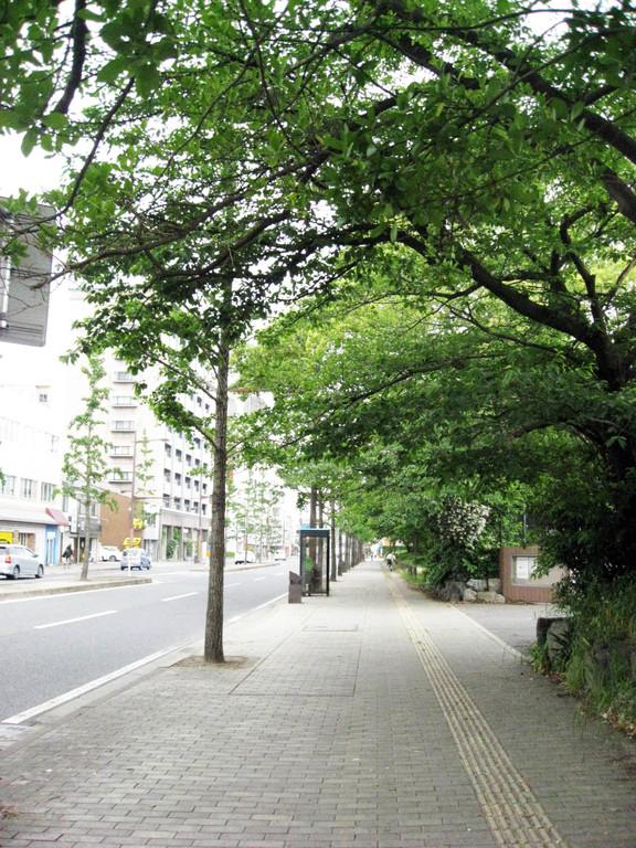 緑豊かな思永中学校の並木道