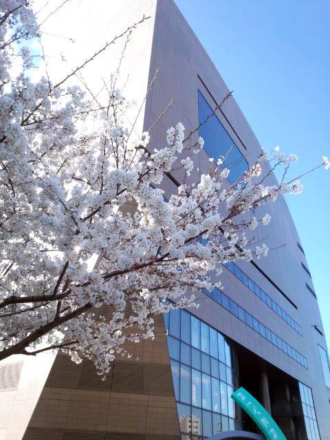リバーウォーク前の桜
