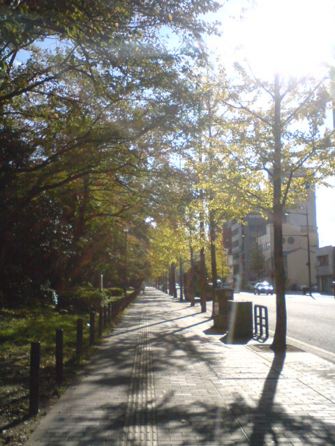 思永中学校前の秋の並木道