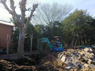 伐採・伐根
