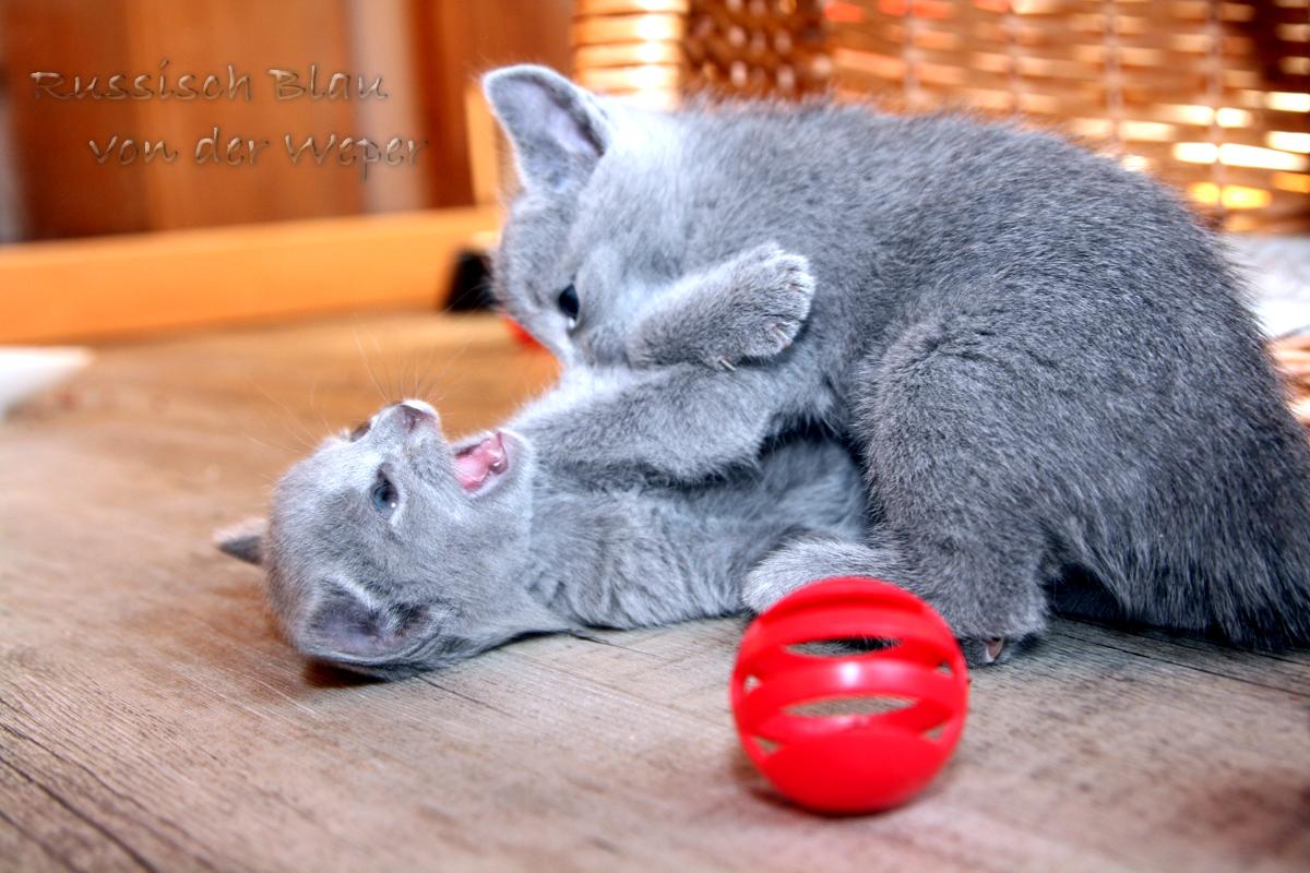...keine Sorge, es ist nur eine typische Rangelei unter Kitten...