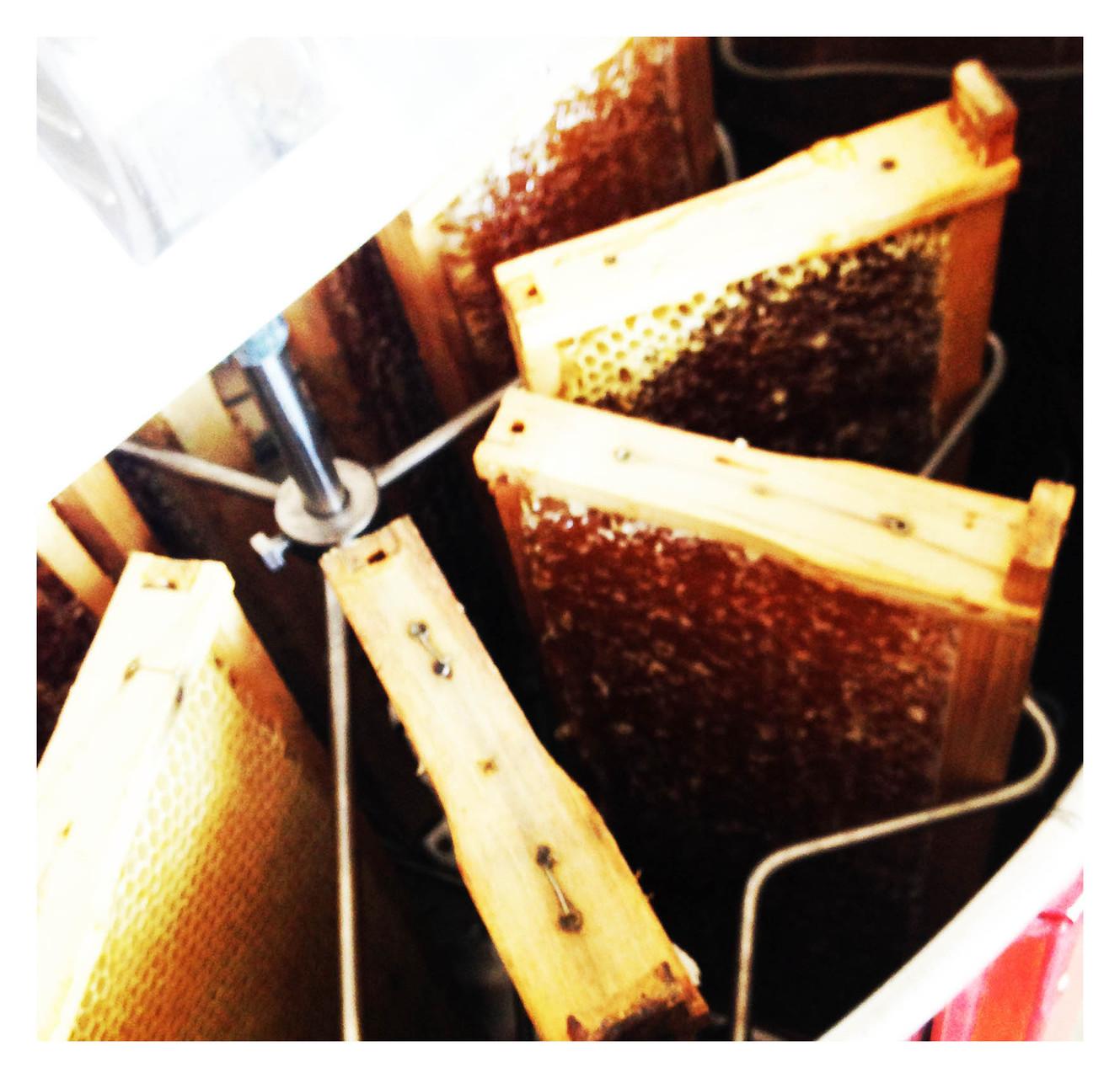 Die entdeckelten Honigrähmchen werden in die Schleuder gestellt und mithilfe von Muskelkraft wird der Honig aus den Rahmen geschleudert. Der Honig wird im unteren Teil der Honigschleuder gesammelt.