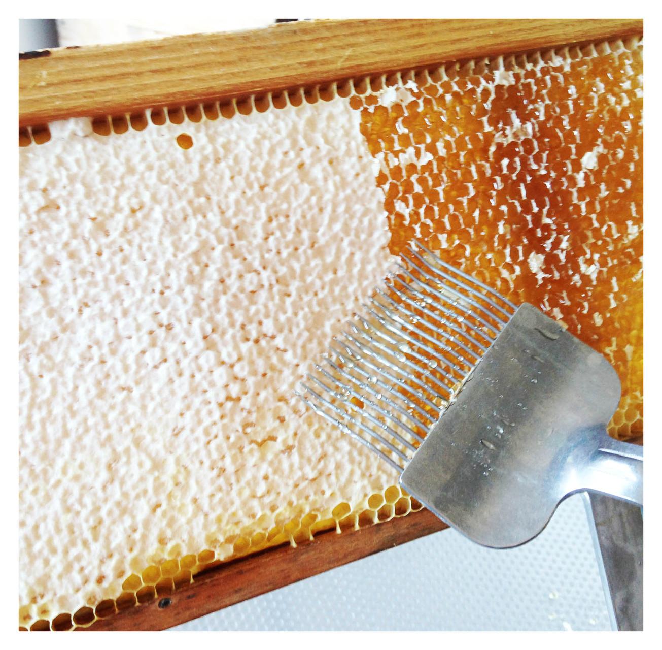 Mithilfe einer Entdeckelungsgabel werden die vollen Honigwaben geöffnet.