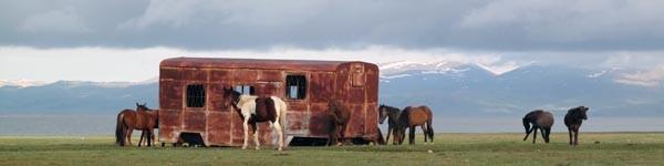 onizou idea nomads - daily mood - gerhard seizer & klara sibeck