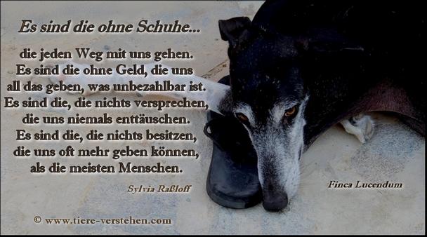 Quelle:www.tiere-verstehen.com