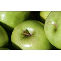 appelboom granny smith, malus domestica granny smith, bewaarappel