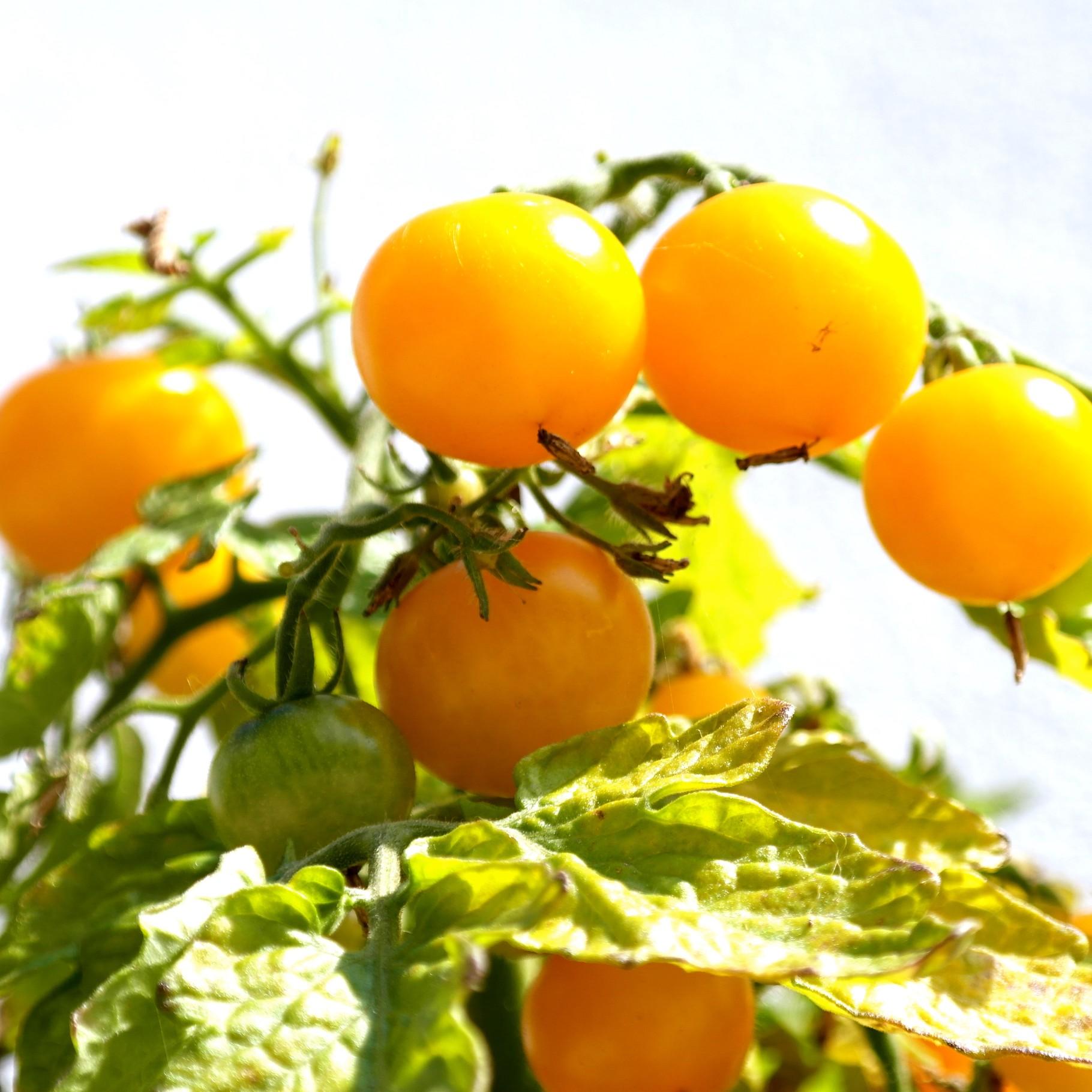 Indeling vierkante meter tuin 20 beste groenten om zelf for Groenten tuin