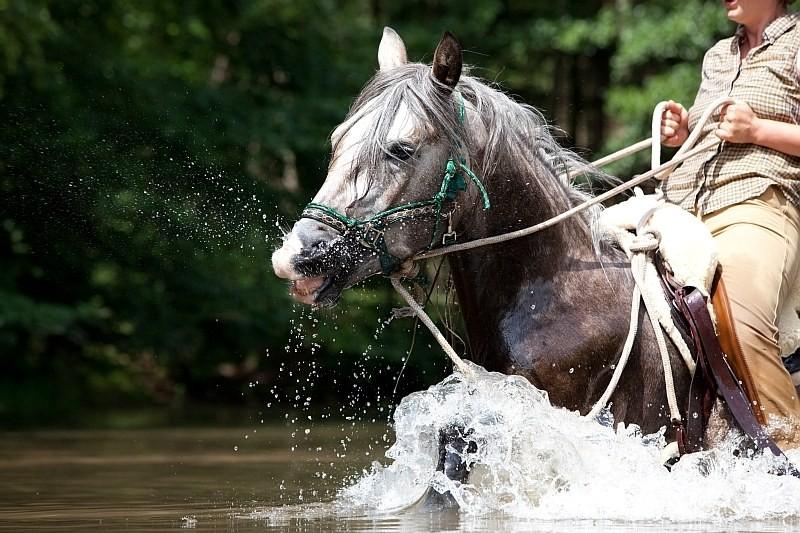 """""""Wie Tanja, Du willst nicht weiter rein... Brems' doch nicht so....Ist doch schön hier im Wasser!""""  ;-)  Foto: www.farah-diba.de"""