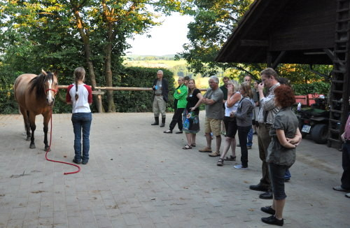 Anne bei der Demonstration zur Pferdeaufstellung
