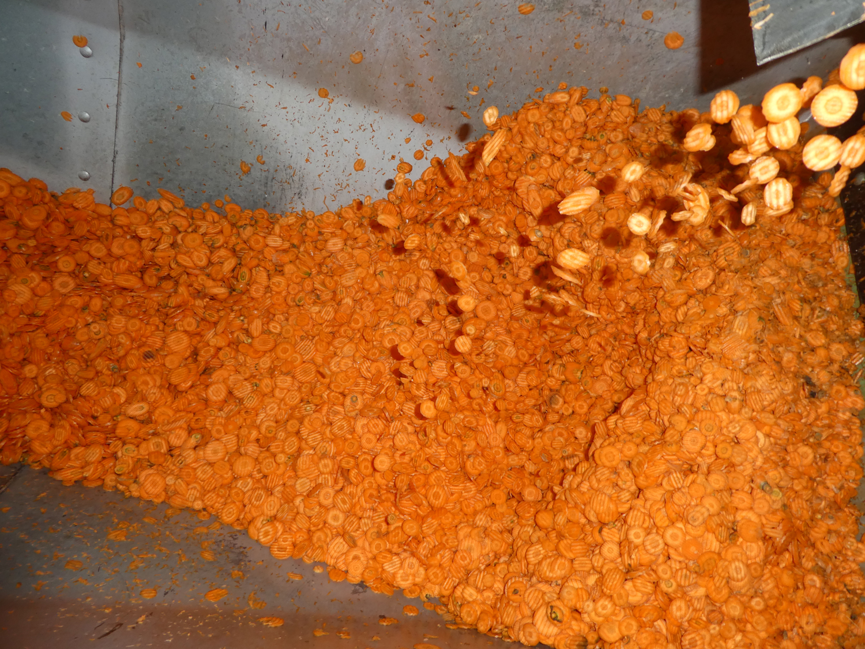 Nach Abschluss der ausführlichen Qualitätskontrolle werden die Karotten, wie hier zu sehen, in Scheiben geschnitten.