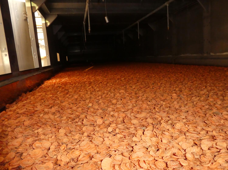 In der Trocknungsanlage angekommen, werden die Karotten-Scheiben mit Hilfe einer Förderschnecke gleichmäßig auf dem Trocknungsband verteilt und mit 100% erneuerbaren Energien schonend zu Karotten Chips getrocknet.