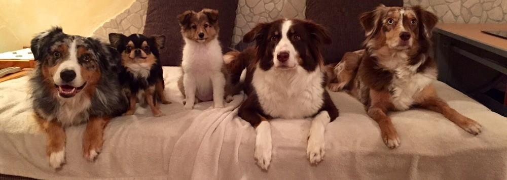 Unsere Hundefamilie: Jester, Mylo, und meine 3 Loop, Bailey und Peaches. 12/2015
