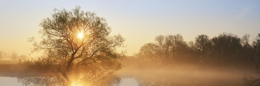 Silber-Weide (Salix alba)  an der Lippe bei Sonnenaufgang, Nordrhein-Westfalen / chpa0129
