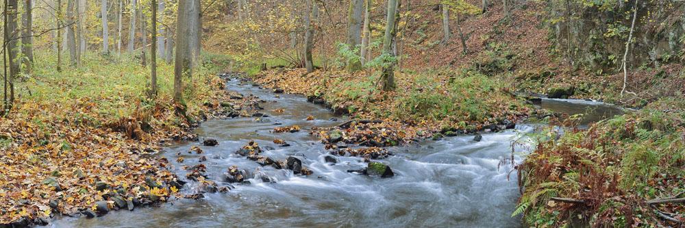Flusslauf im Herbst, Sächsische Schweiz, Sachsen / chpa289