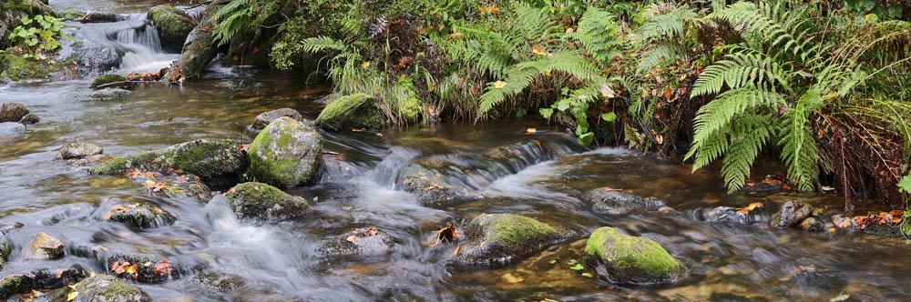 Bergbach im Herbst, Nationalpark Bayerischer Wald,  Bayern / ch168893