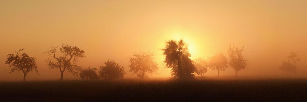Obstbäume bei Sonnenaufgang, Nordrhein-Westfalen / chpa238