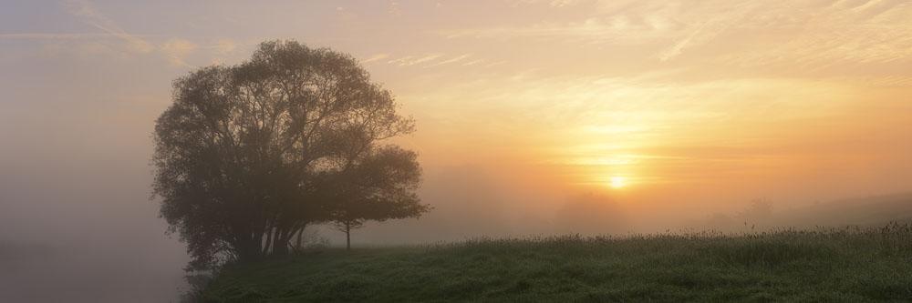 Silber-Weide (Salix alba) bei Sonnenaufgang, Nordrhein-Westfalen / chpa0139