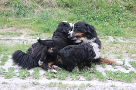 Alisia und ihre Babys