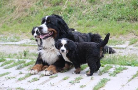 Lorbas und die Babys