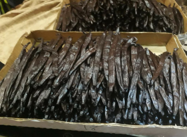 Exportbereite Vanilleschoten