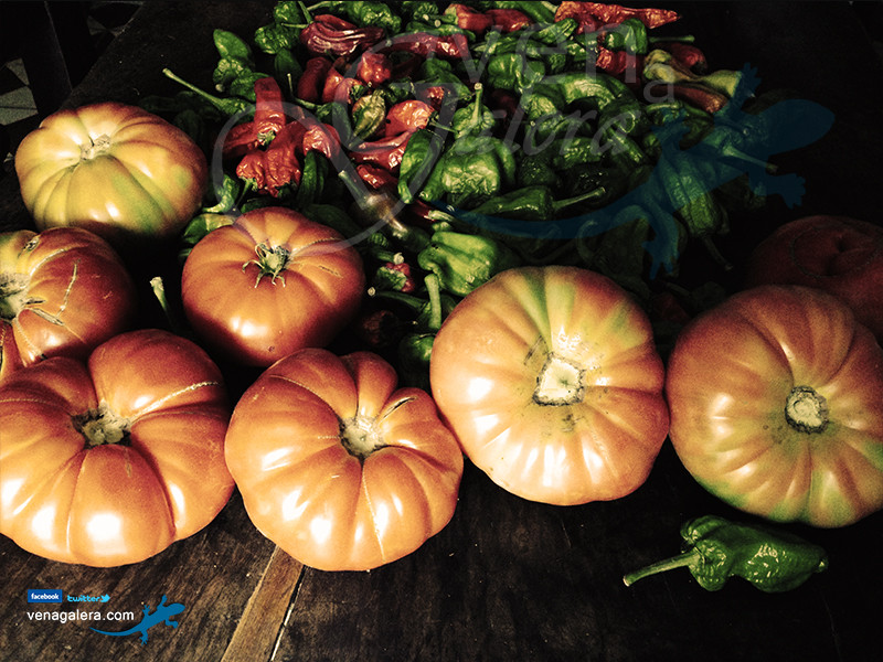 Gastronomía de Galera: Tomates. Foto: @venagalera