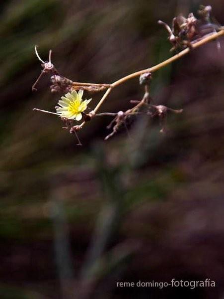 Flora de Galera - Foto: R. Domingo