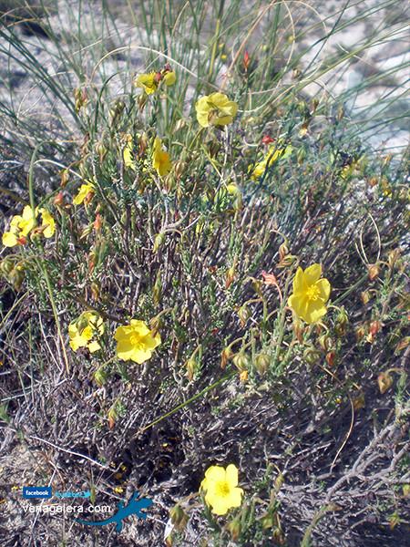 Flora de Galera - Foto: @venagalera