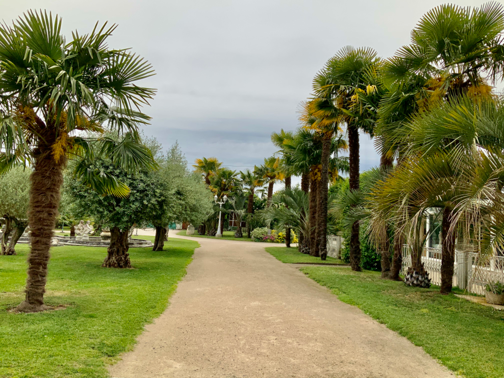 Allée des palmiers
