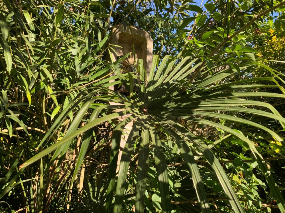 Feuille du palmier et boudha