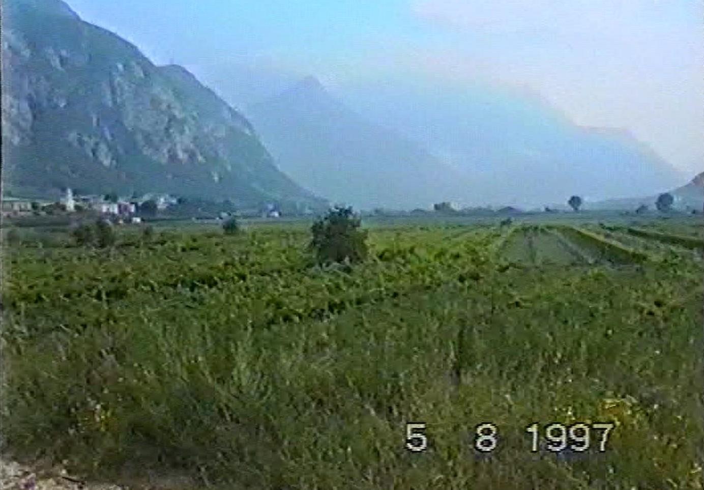 die Weinberge von Südtirol