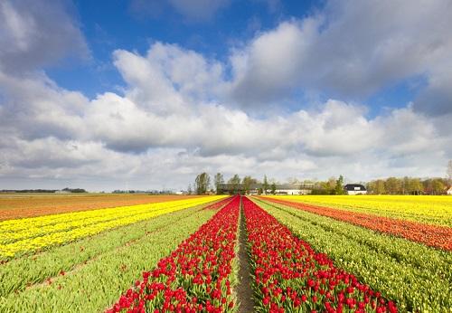 Pour le digital et les autres transformations... Dirigeants, cultivez vos champs!