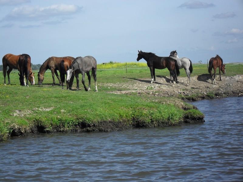 Elevage de chevaux