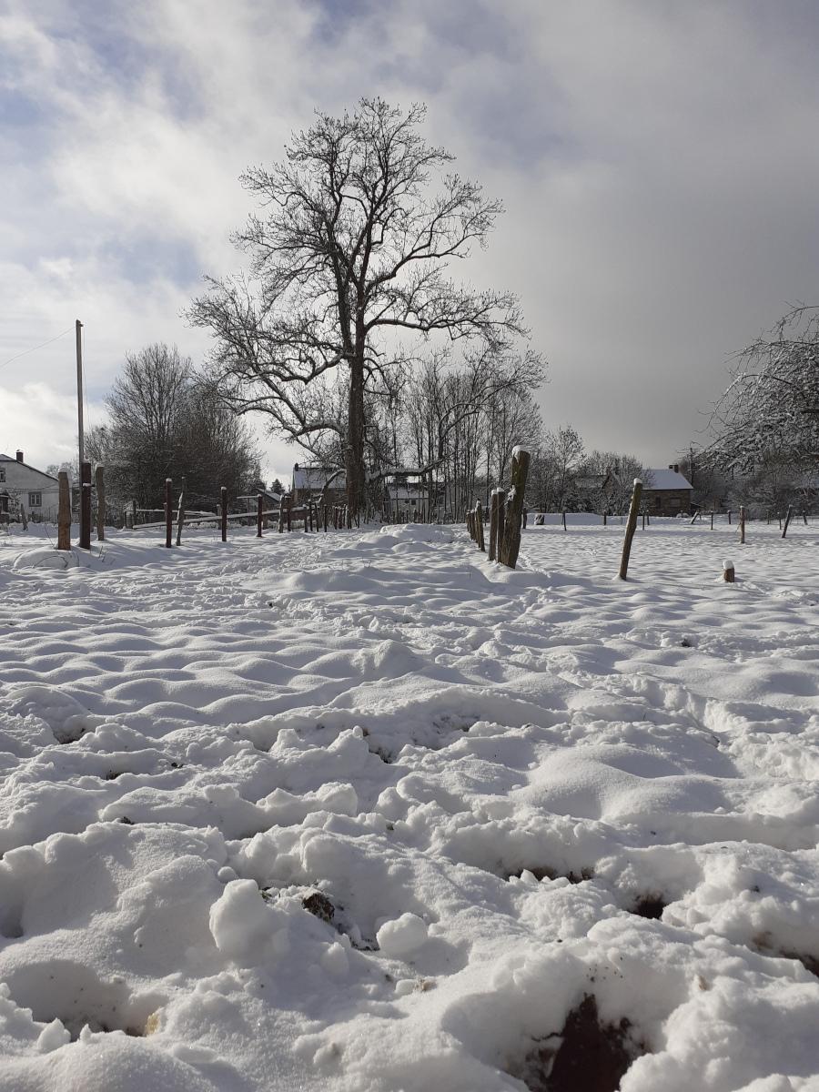 Altitude 445 | A découvrir au jardin | Sous la neige