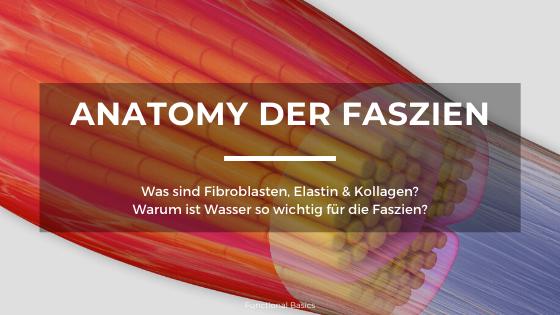 Anatomie & Physiologie der Faszien
