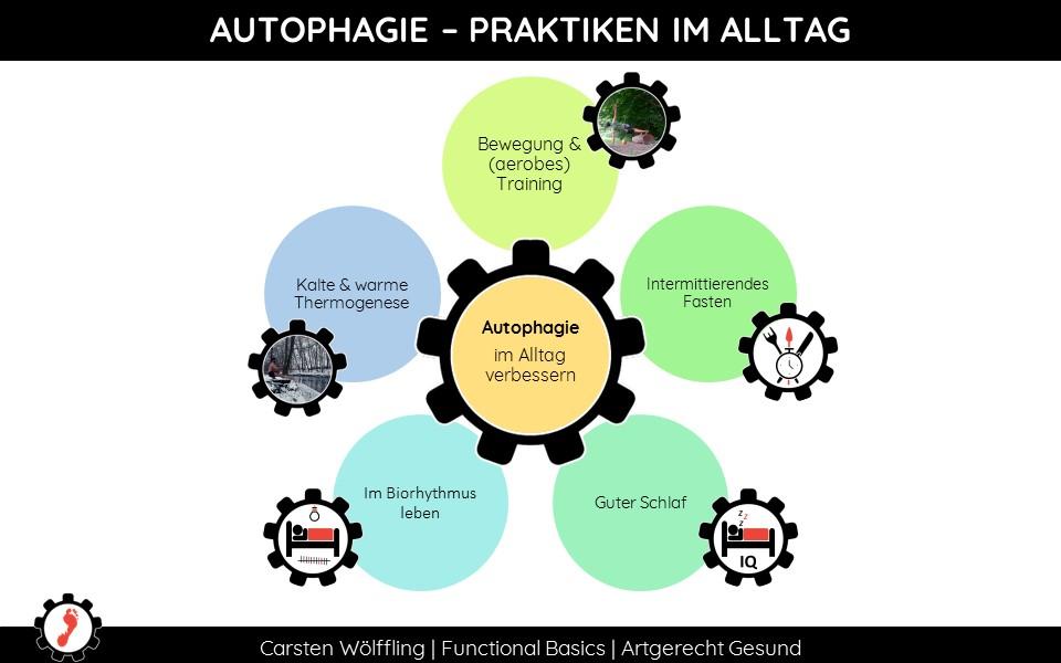 Was aktiviert die Autophagie?