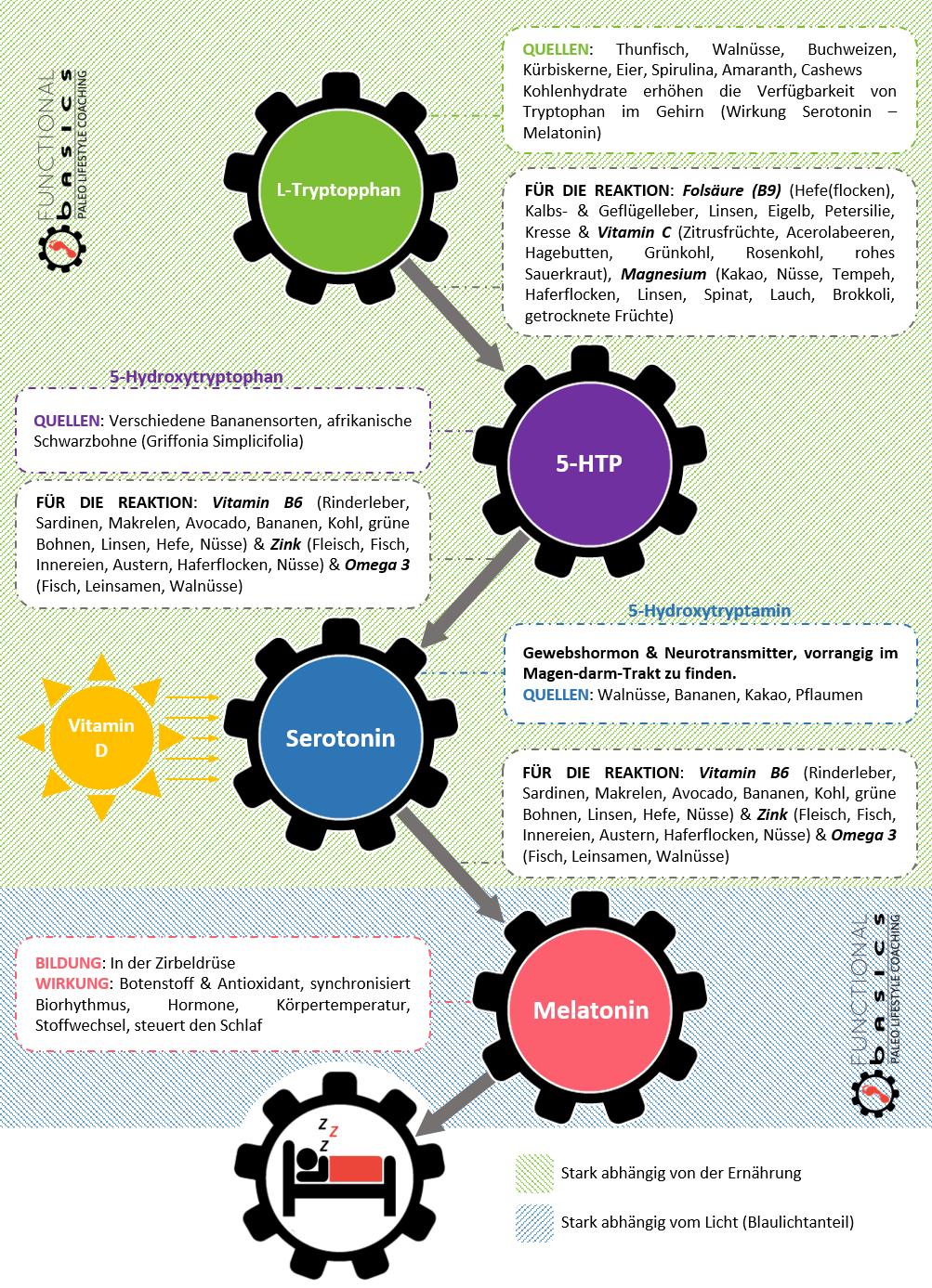 Biochemie des Schlafes.