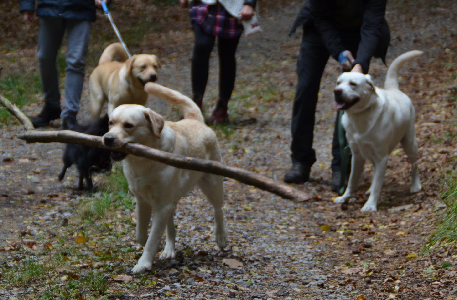 Maple - bringt Brennholz
