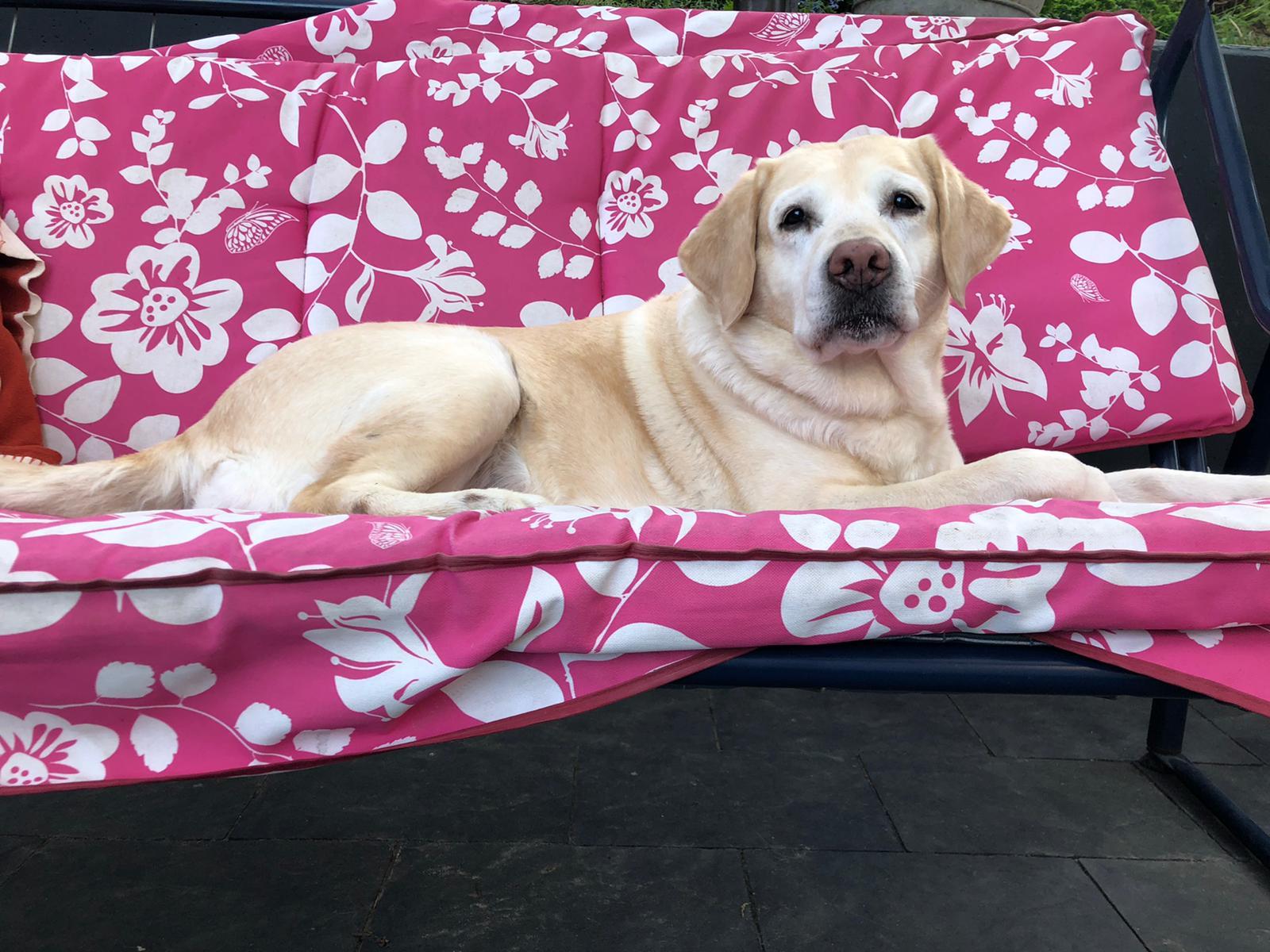 Mabel genießt ihr Rentnerdasein :-)