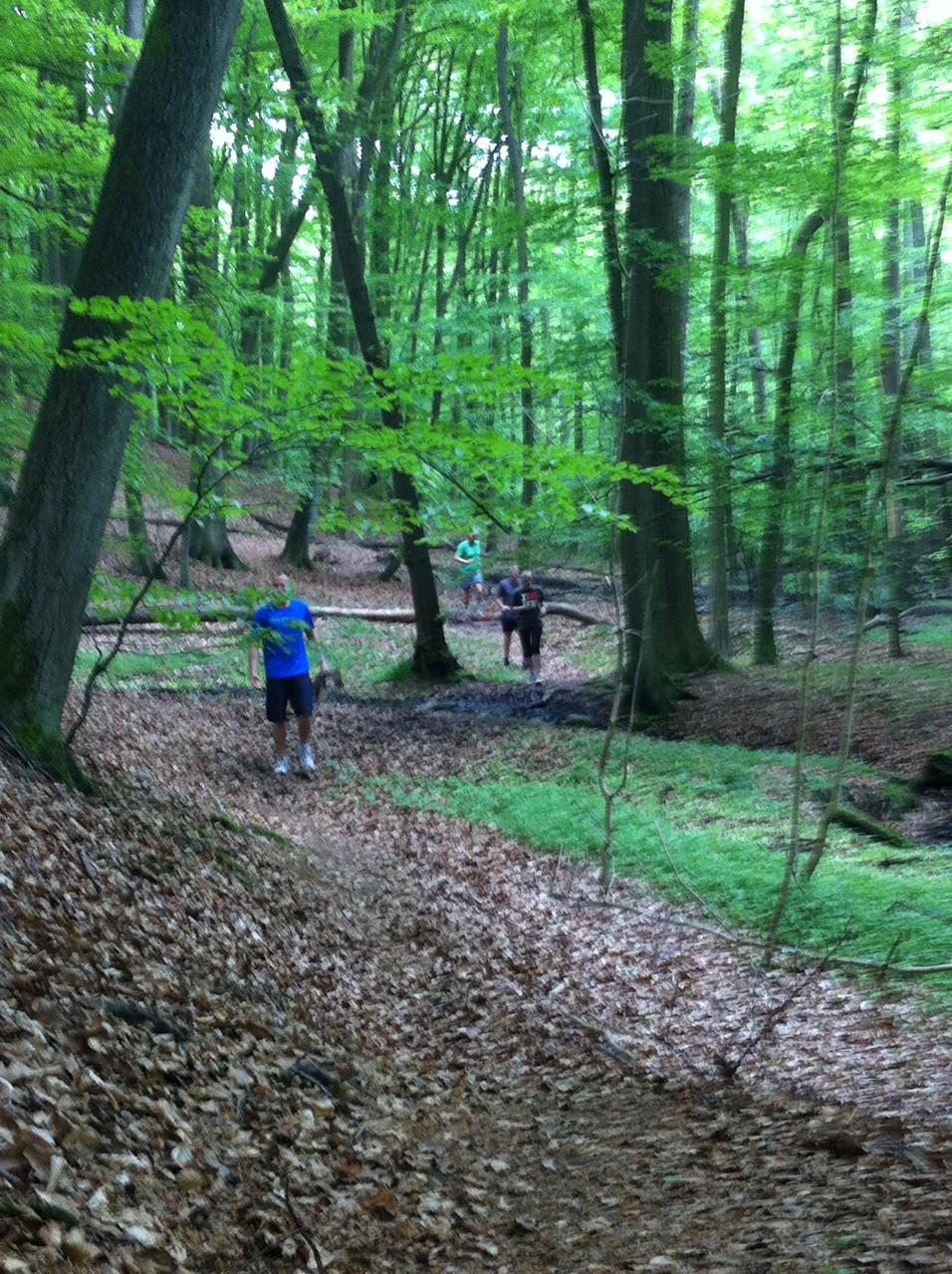 Durch den Wald!