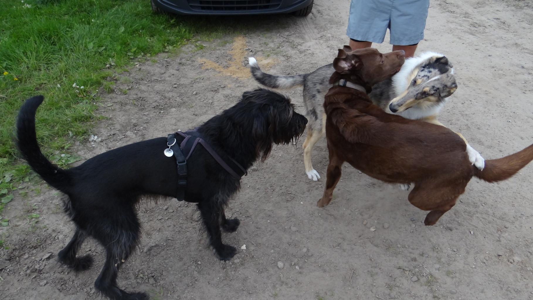 Die Hunde freuen sich auch über eine Pause!