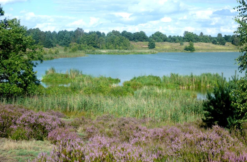 Tangersdorfer Heide (Foto: Sven Heussen)