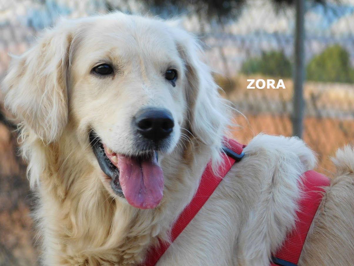 ZORA - Cuencanimal