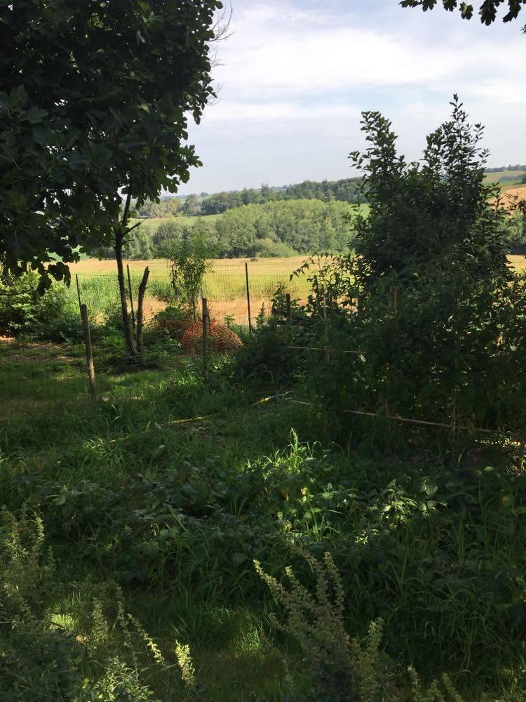 Au fond, le bois où s'était réfugiée Vegan durant sa fugue