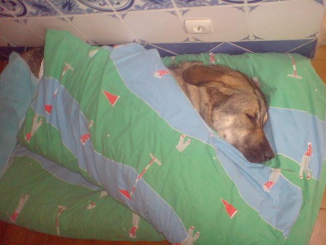 Après une dure journée de jeux, un peu de repos dans le lit! ARCHALL