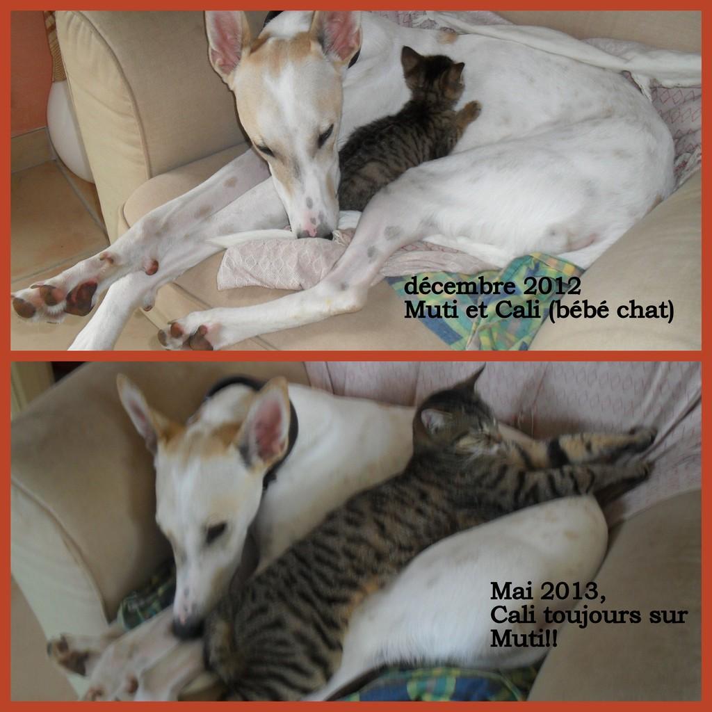 MUTI et CALI... Amour toujours !